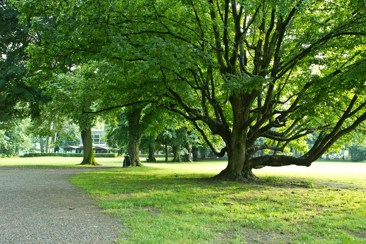حديقة شادو بارك - مدينة تون - سويسرا