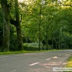 طريق جانبي حديقة بادن بادن Lichtentaler Allee