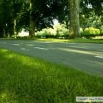 الطريق الجانبي لحديقة بادن بادن