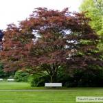 الأشجار الملونة بحديقة بادن بادن